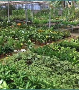 Algarve Plantas